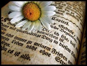 Favim.com-book-speech-memory-486469